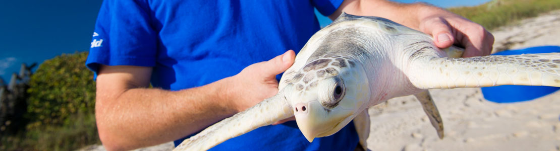 Sea World rescue turtle