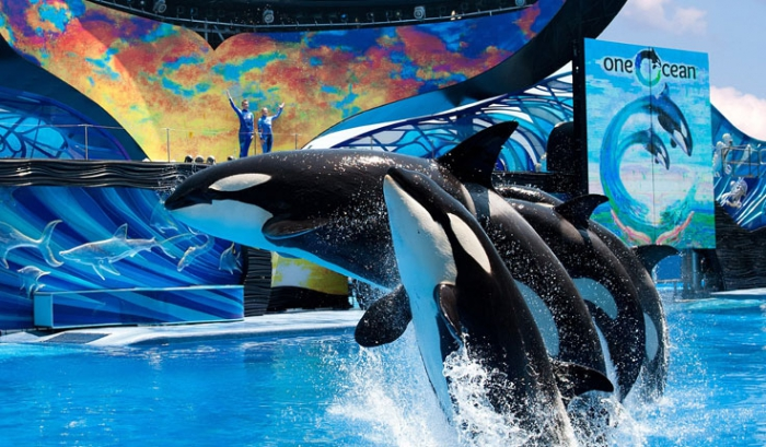 Sea World Summer Nights